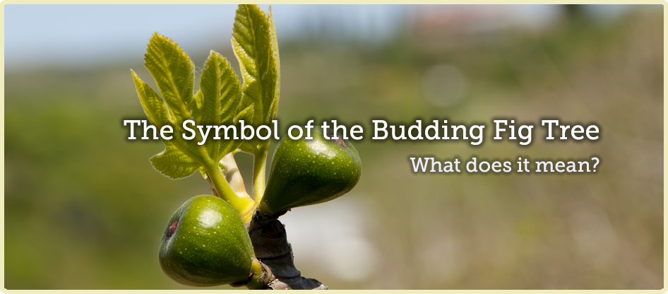 budding relationship meaning